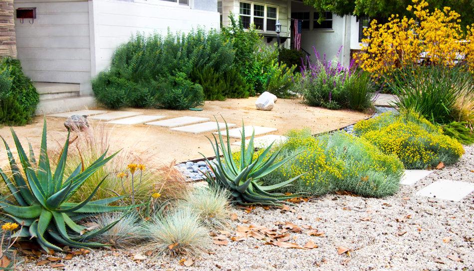 Native garden going wild under Ulysses Aban's care