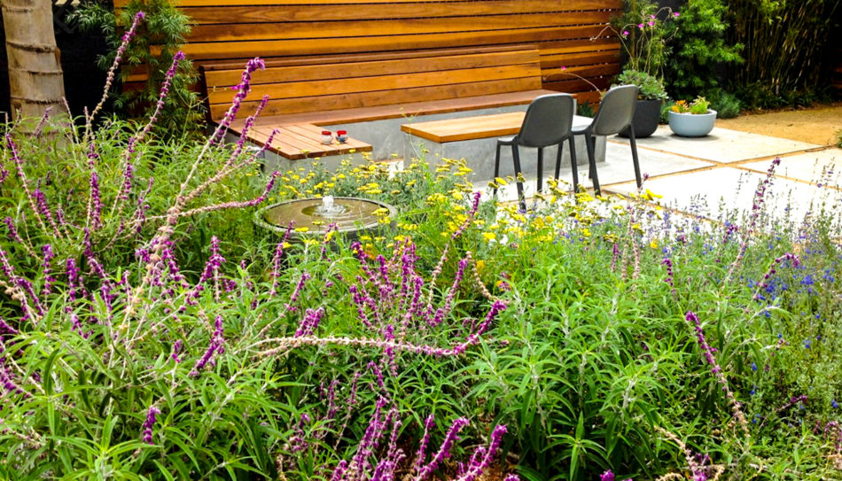 Native garden designed by Steve Siegrist featuring Cleveland Sage in foreground