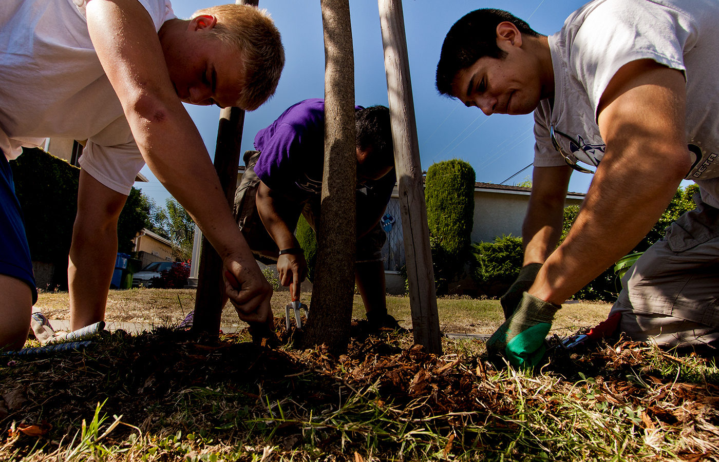 Three volunteers from TreePeople planting a tree.