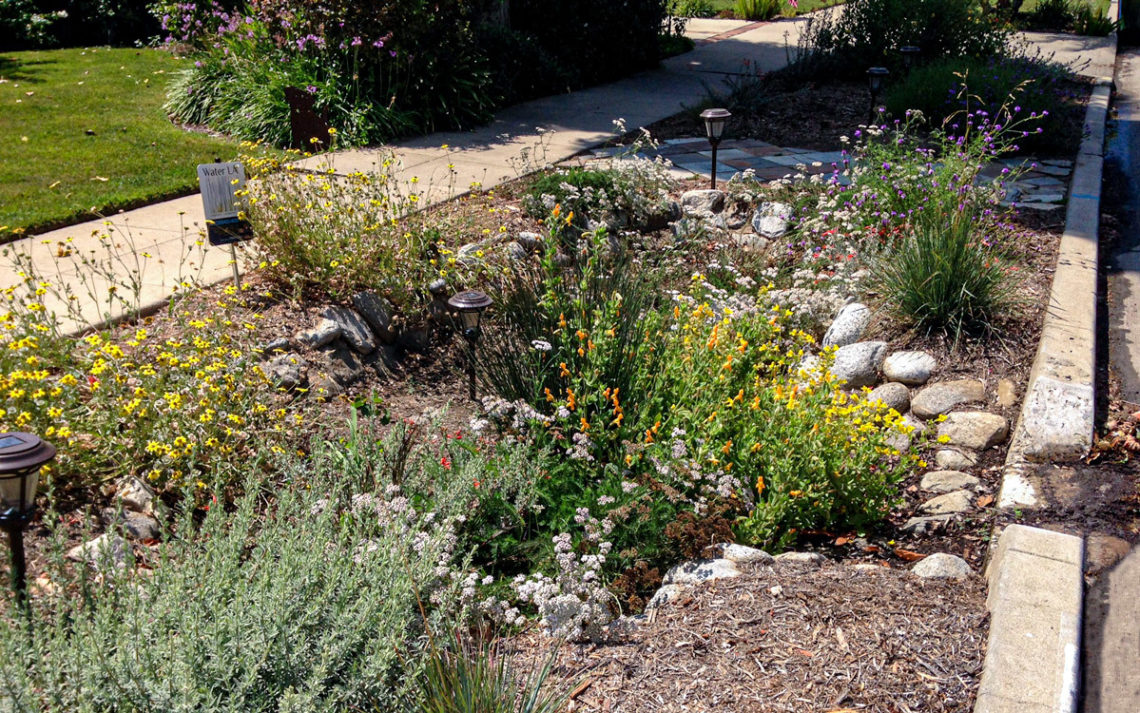 A California native garden with berms and swales.