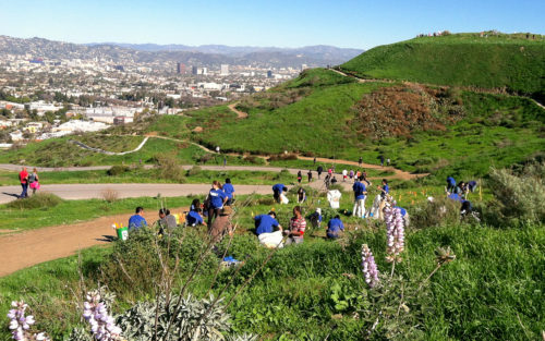 People on a hillside  planting plants in Kenneth Hahn Park with the Los Angeles skyline behind them.