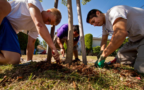 Volunteers work together to plant a tree in a neighborhood